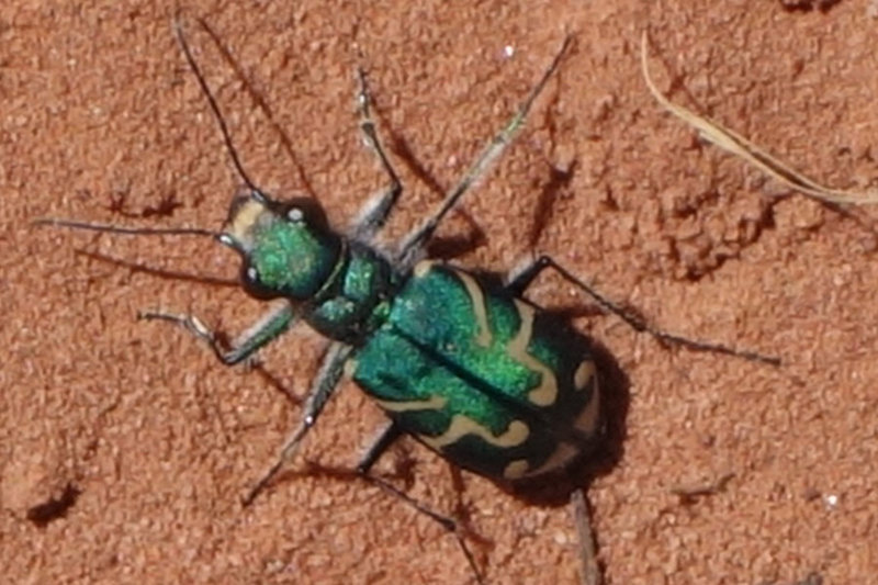 Green insect in Kolob Canyon