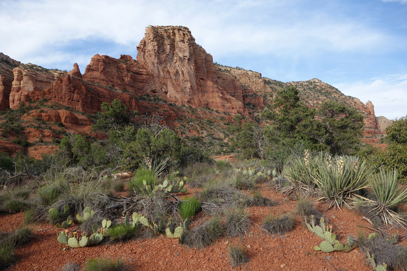 Cactus and agave on the Courthouse Butte loop