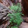 Short slot canyon off of Long Canyon.