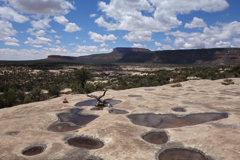 Filled potholes on the mesa of the Natural Bridges National Monument loop.