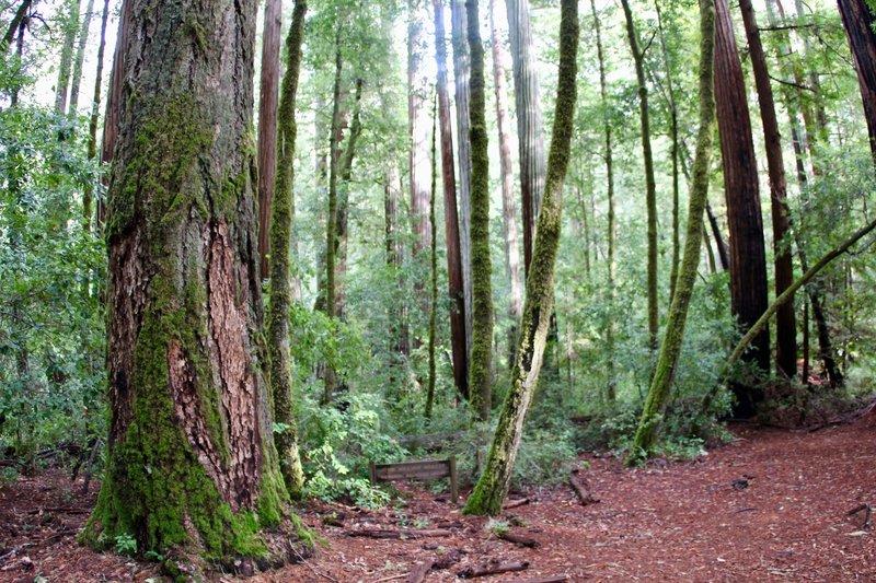 John William Abbott Memorial Redwood Grove