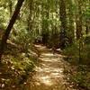 More Sequoia Trail