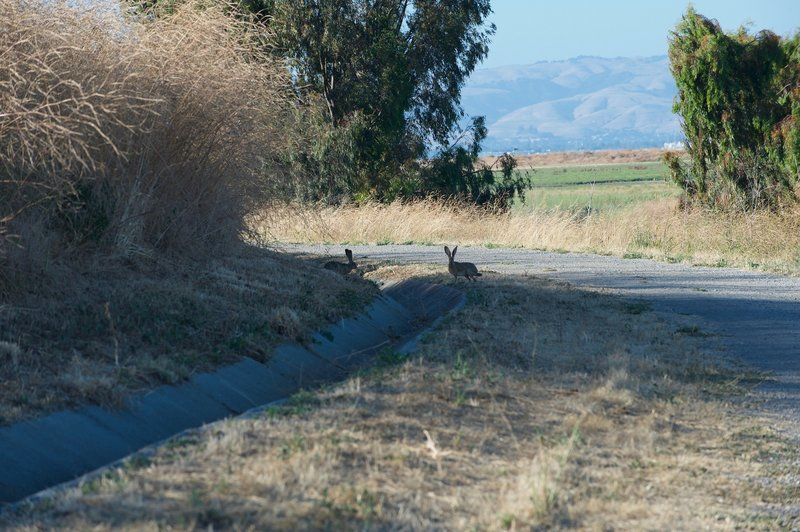 Rabbits can be seen along the trail if you keep your eyes peeled. They'll take off when they hear you coming.