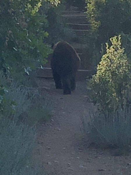 Bear blocking the trail!