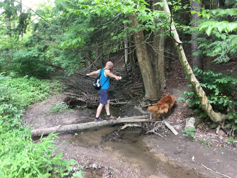 There are some fun trail obstacles at Chestnut Ridge Park.