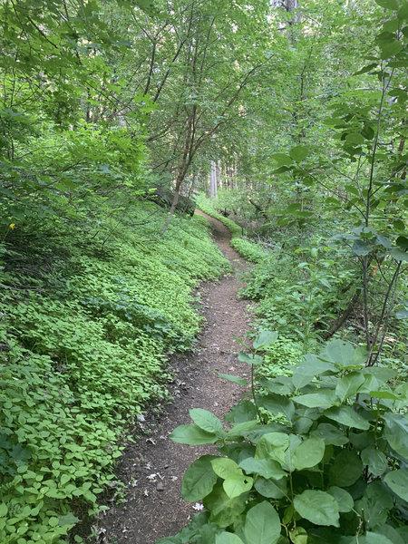 Beirdneau Trail