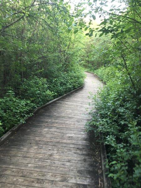 Boardwalk through wetland. No bikes allowed.