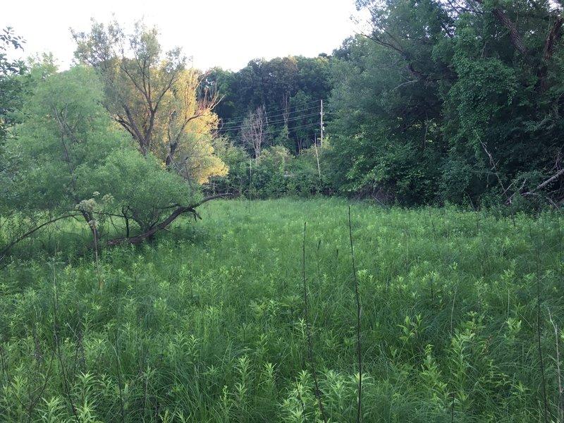 Wetland field from boardwalk.