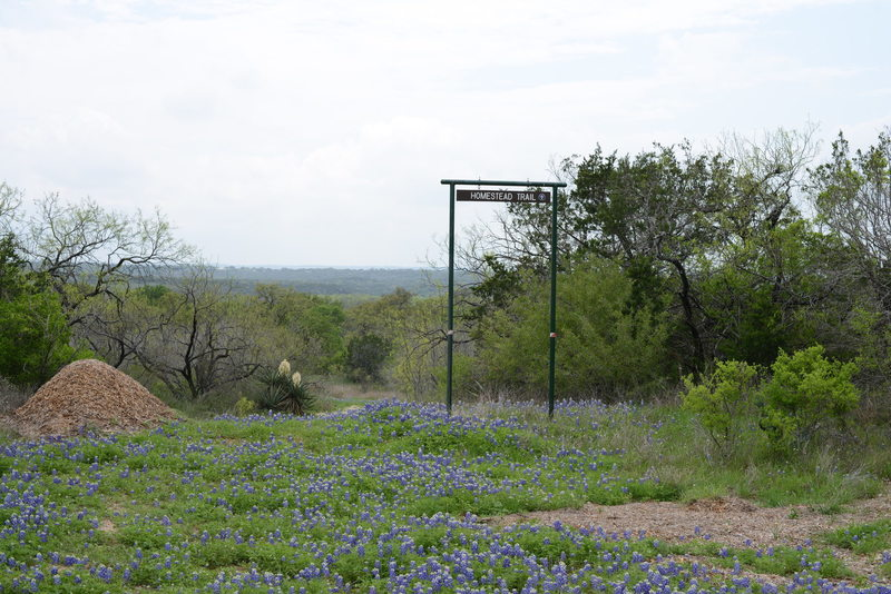 Homestead trailhead surrounded by beautiful bluebonnets.