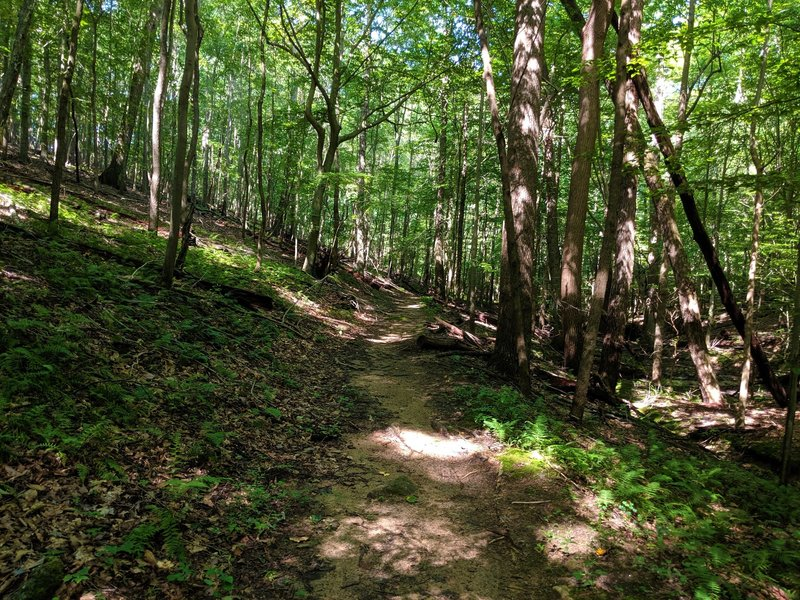 Shaded section of the Patapsco Thru Trail as it descends, following a small stream.