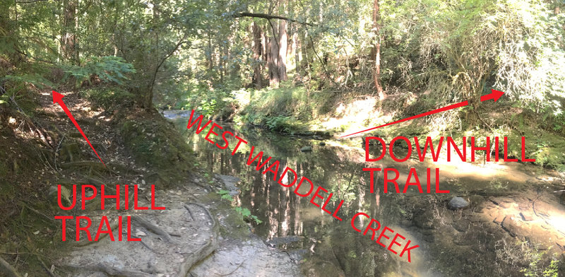 West Waddell Creek Crossing explained looking upstream. I honestly had to stop and walk around to notice the downhill section due to the water level.