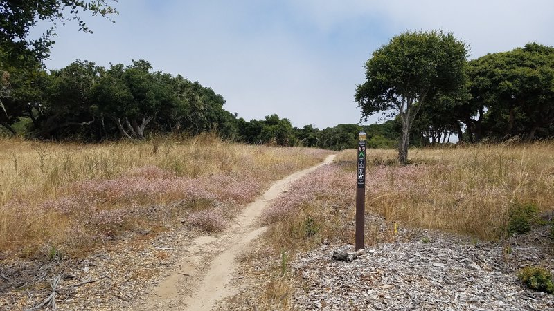 Fort Ord National Monument Trail 69