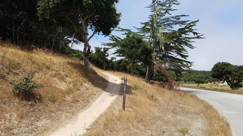 Fort Ord National Monument Trail 69 at Hennekens Ranch Rd.