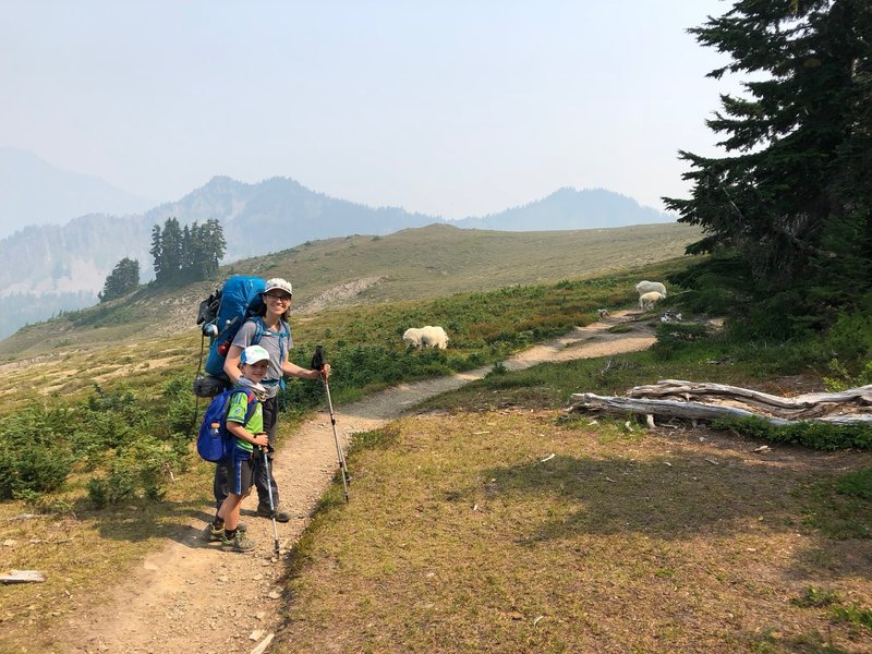 Stupid mountain goats on High Divide Trail