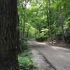Trolley Line Trail