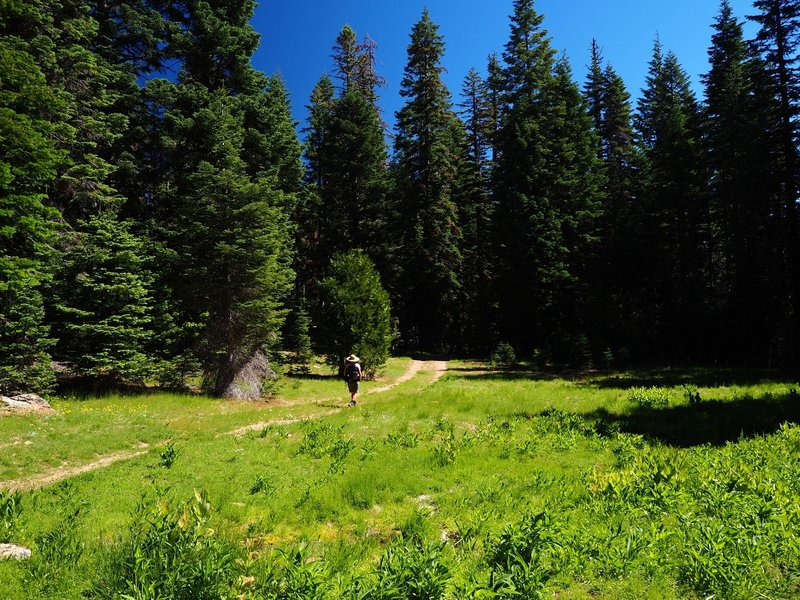 A small meadow along the trail to the lake