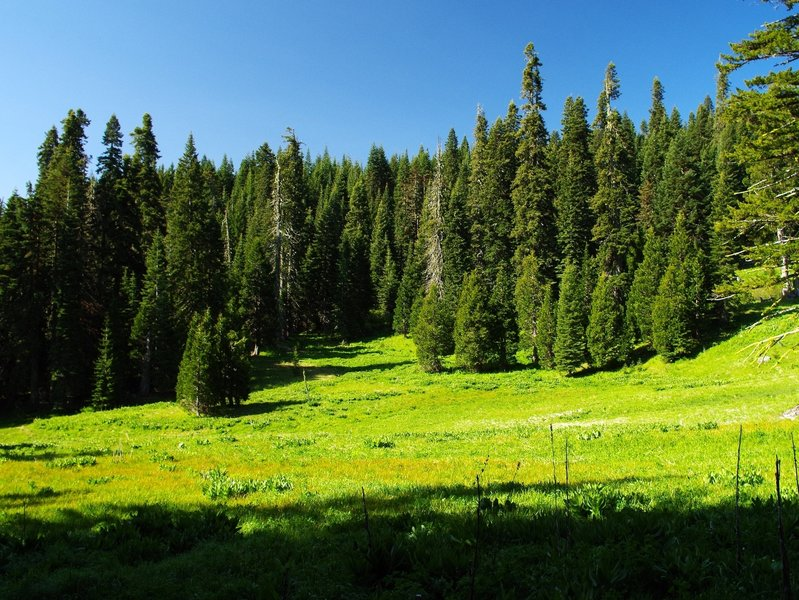 One of the meadows at Fir Glade