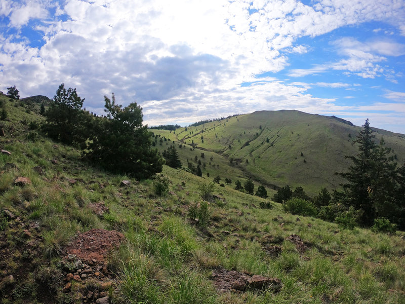 View from the trail of the grassy hills on Gooseberry Trail.