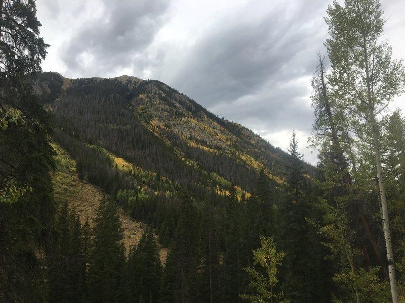 Aspen colors.