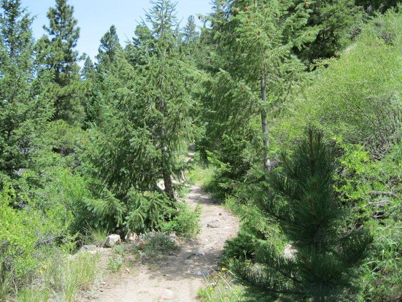 Silver Creek Wagon Trail
