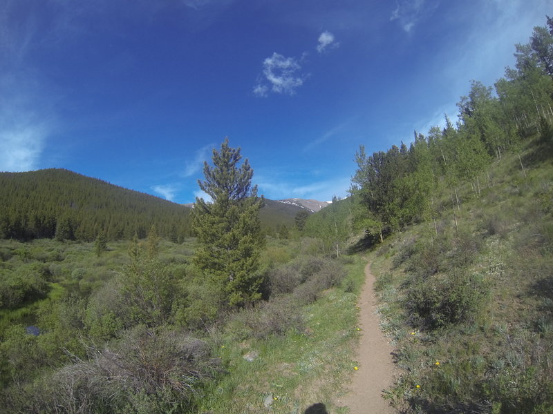 One of the rare flat sections on this trail