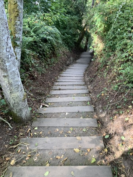 Stairs going up to the wooded trail.