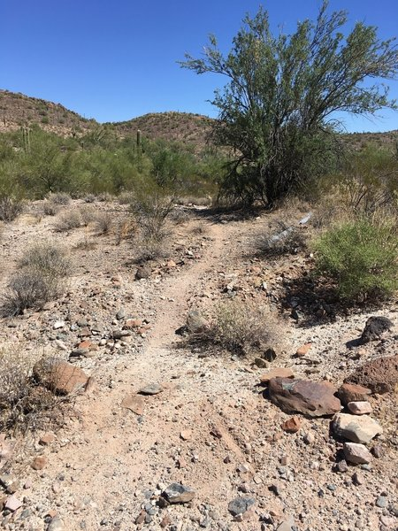 Let the fun begin. This is were the singletrack starts. Be careful not to miss the turn.