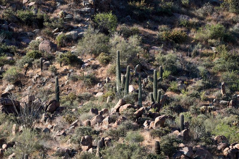 Cacti views.