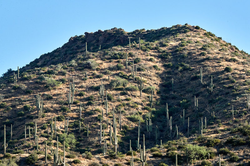 Cactus mound by Camp Creek.