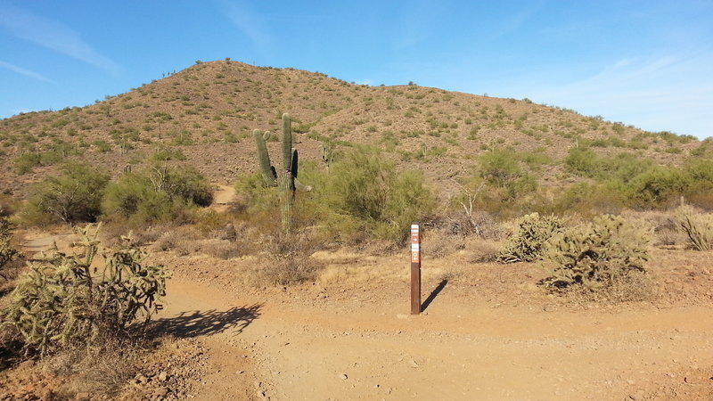 Easily viewed trail marker. Left Ocotillo, right Apache Wash Loop.