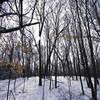 Elm Creek Park Reserve