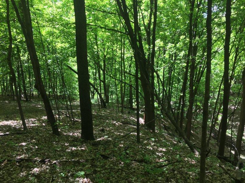 Dense foliage - trail on the left.