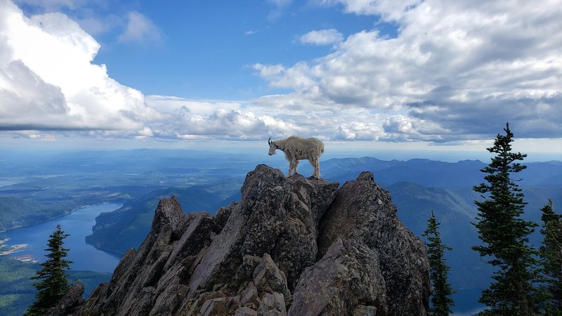 Looking South from the peak of Mount Ellinor.