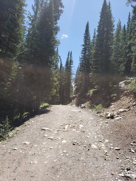Heading up the Mayflower Gulch Trail.