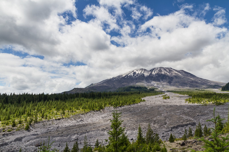 It looks like a glacial moraine, but it's actually a mud/lava flow from the 1980 eruption.