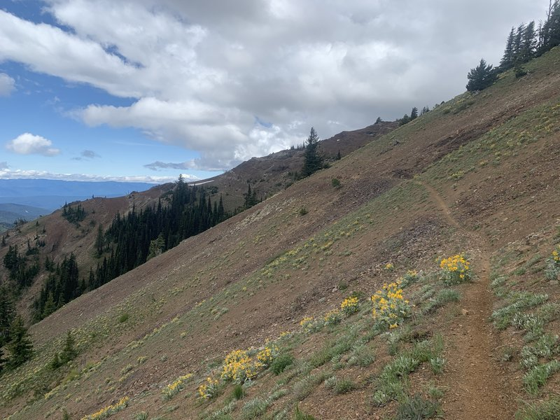 County Line Trail on the side of Miller Peak.