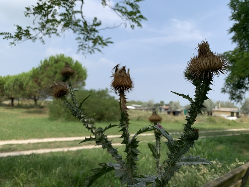 Mediterranean vegetation.