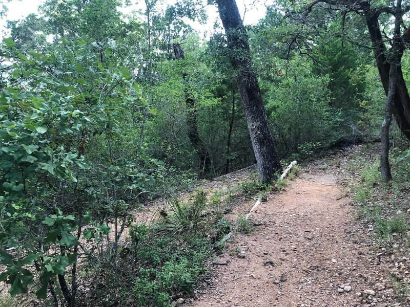 The trail winds a bit at the beginning to provide a gentle downwards slope.