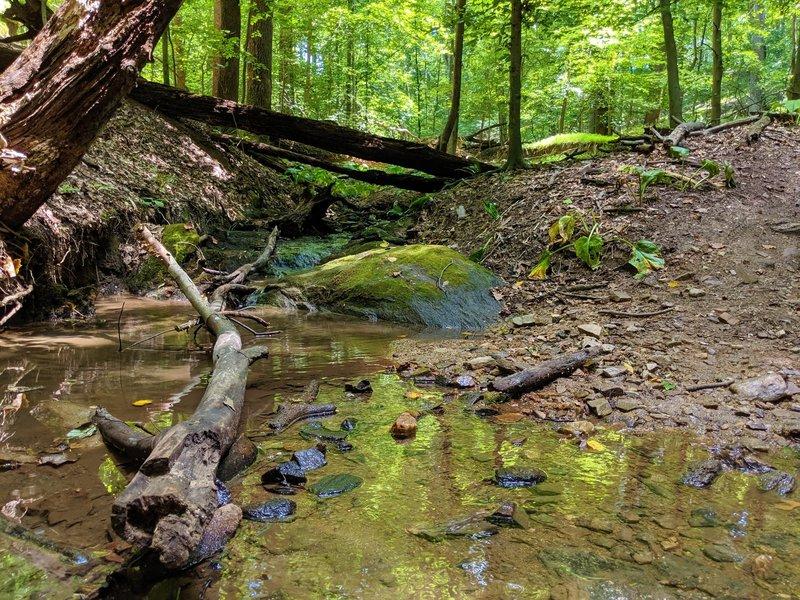 Gentle stream crossing along the Daniels Trail.