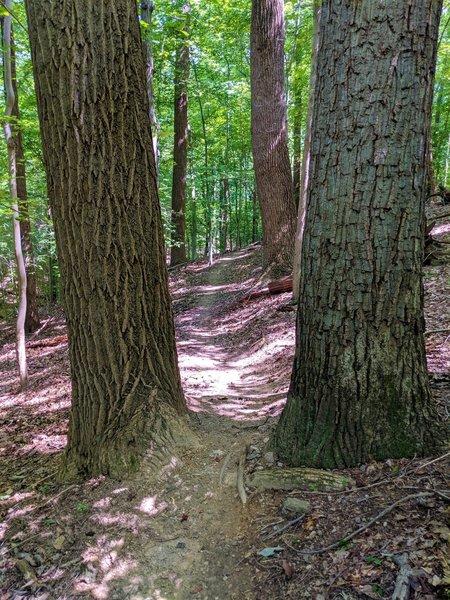 Tight fit along the Daniels Trail.