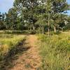 The trail is well maintained and cut short.