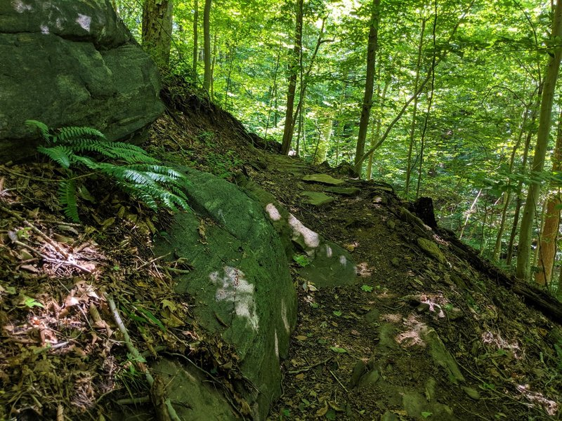 A rocky stretch along a cutback on the Allenford Trail.