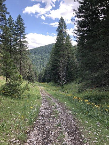 Schofield Canyon Trail T5007A