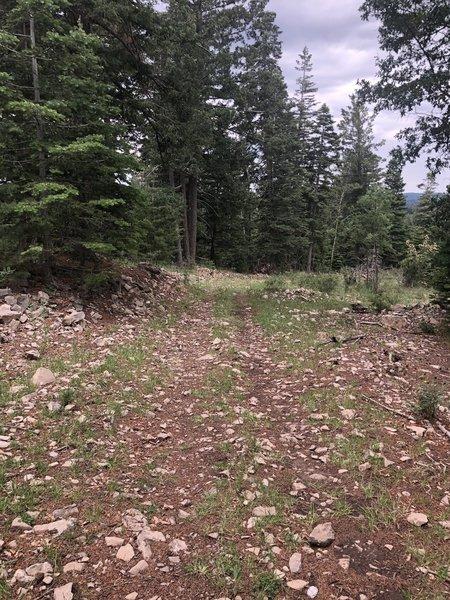 Shortcut Trail T5007B