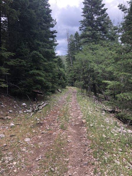 Schofield/Benson Canyon Trail T5007C