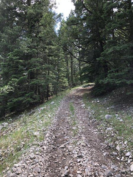 Schofield/Benson Canyon Trail T5007C.