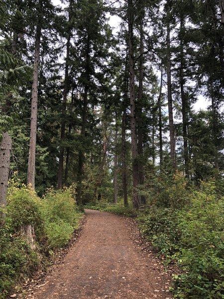 Trail view.