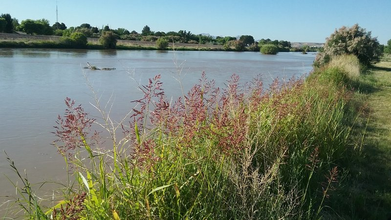 View of the Rio Grande in the summer.