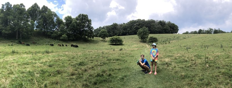 Kids and cows in the meadow on Green Knob.