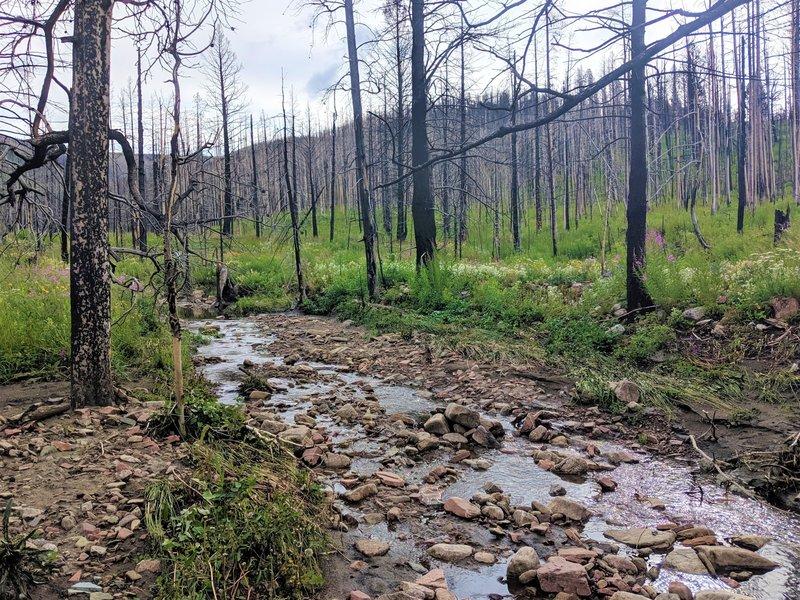 Alice Creek